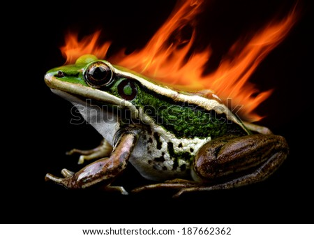 Frog and Fire isolated on a black ground - stock photo
