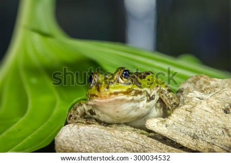 Frog And Green Sheet - stock photo