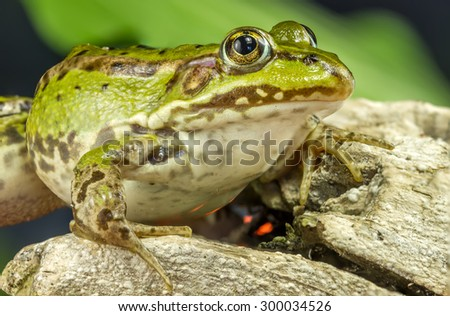 Frog And Tree Branch - stock photo