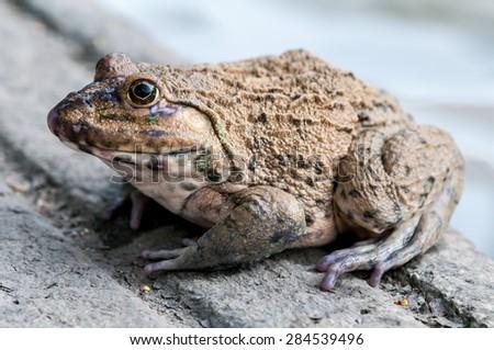 frog - animal concept - stock photo