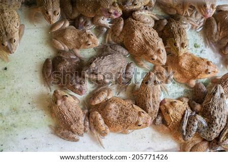 Frog background - stock photo