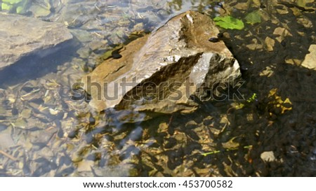 Frog children tadpoles  enjoy life by  swimming in water  and  rest on stone  near bank of  lake