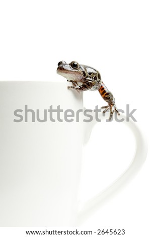 frog climbing around on a coffee cup, macro isolated on white