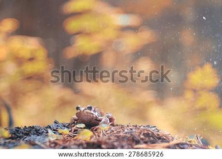 Frog close-up portrait - stock photo