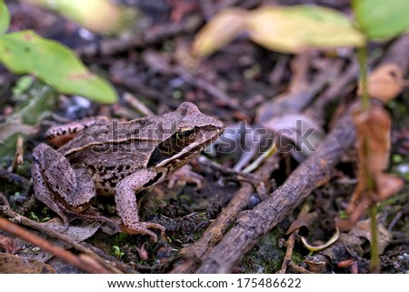 Frog in the wild - stock photo