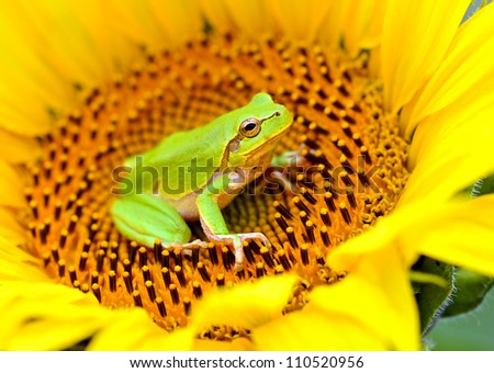 Frog on a flower - stock photo