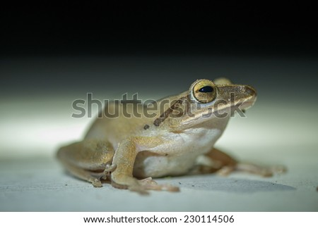 frog On a white background - stock photo