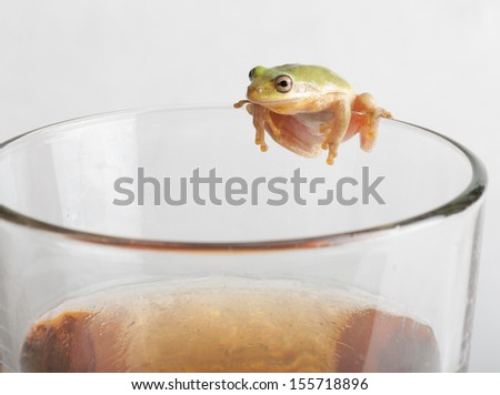 frog on glass of beer