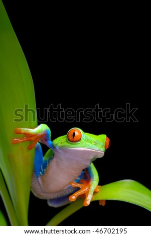 frog on plant leaves isolated black - stock photo