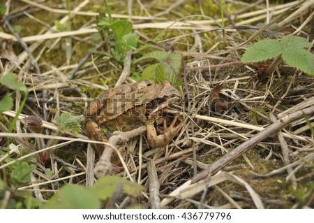 Frog portrait close up macro microcosm animals - stock photo