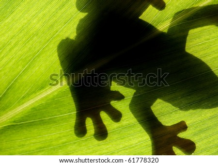 frog stay on leaf in backlight - stock photo