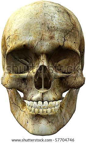 front face skull - stock photo