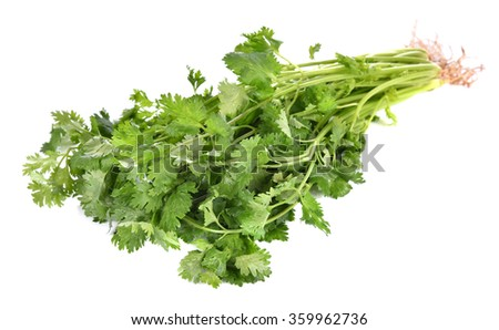 front focus Coriander bunch isolated on white - stock photo