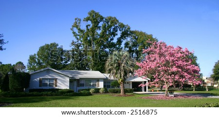 Front of a white ranch-style house with a Pink Tabebuia tree in full bloom, Orlando, Florida PHOTO ID: House00009a - stock photo