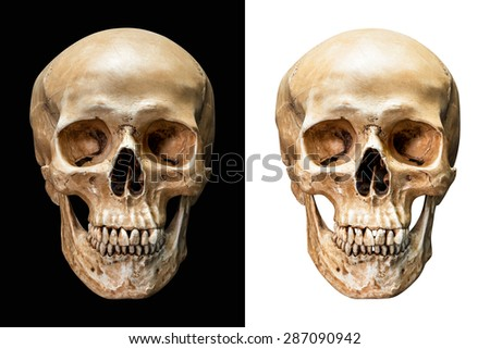 Front of human skull isolated on black and white background with clipping path - stock photo