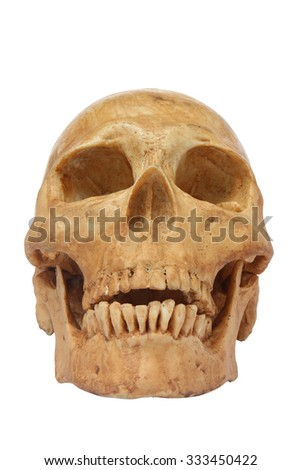 Front of human skull model isolated include path