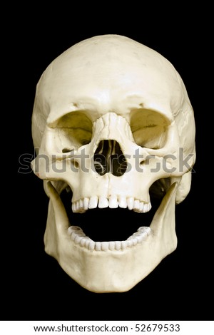 Front view of a fake skull with open mouth isolated on black background - stock photo