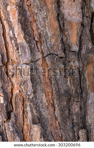 Front view of a tree bark with a focus on the details.
