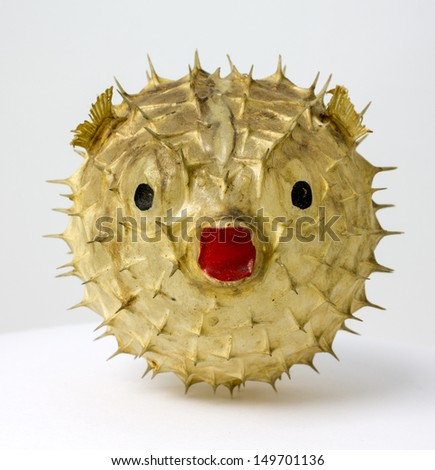 Front view of Globe fish Stuffing - stock photo