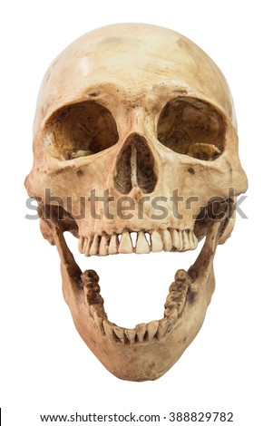 front view of human skull on isolated white background,clipping path - stock photo