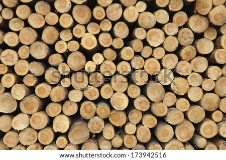 Front view of stacked logs. - stock photo