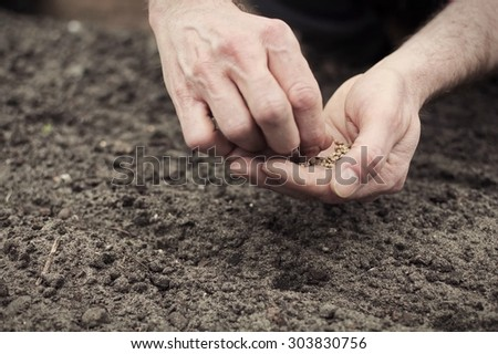 Frontal landscape view of human hands planting spinach seeds into the ground.