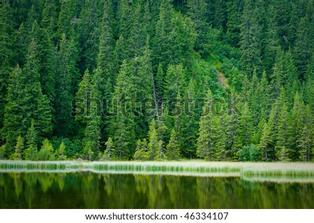 frontier forests of fir trees and mountain lakes lednikogovo - stock photo