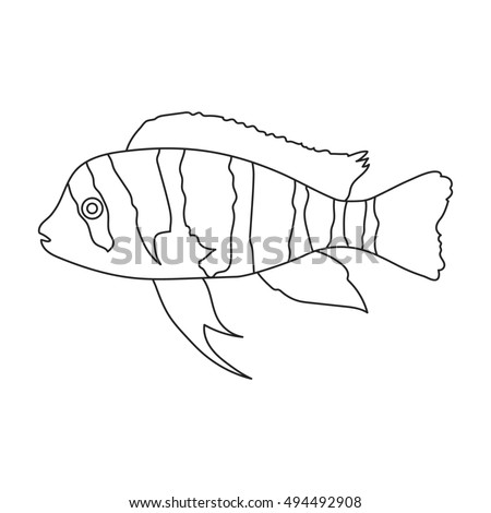 Attractive Frontosa Cichlid Cyphotilapia Frontosa Fish Icon Line. Singe Aquarium Fish  Icon From The Sea, Design Inspirations
