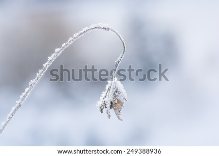Frost bell - stock photo
