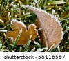 Frost Covered Leaf on Frozen Grass on an Autumn Morning - stock photo