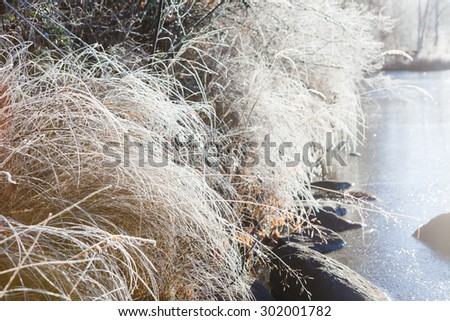 Frost hay in morning sunshine - stock photo