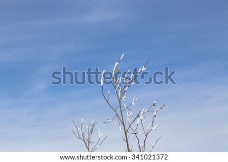 frost on the branch of a tree against the sky. abstract background  - stock photo