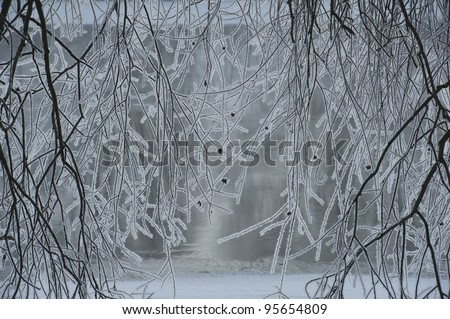 frost on the branches - stock photo