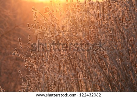 frost on the frozen grass, winter sunset - stock photo