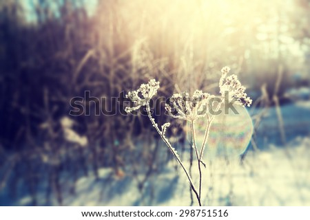 Frost on the plants in winter forest and sunlight. Macro image with selective focus, vintage filter - stock photo