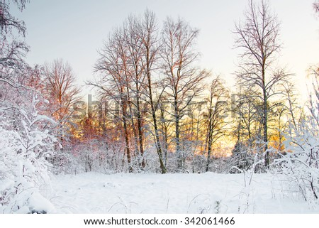 Frost on the trees in the forest. Cold winter day at sunset. Frost and snow on the branches. Beautiful winter nature. Panorama of the winter forest. The winter landscape. - stock photo