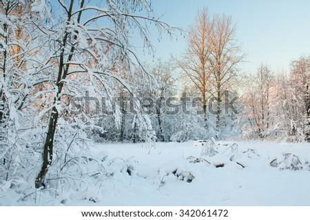 Frost on the trees in the forest. Cold winter day at sunset. Frost and snow on the branches. Beautiful winter nature. Panorama of the winter forest. Winter landscape. Snow fairy forest. - stock photo