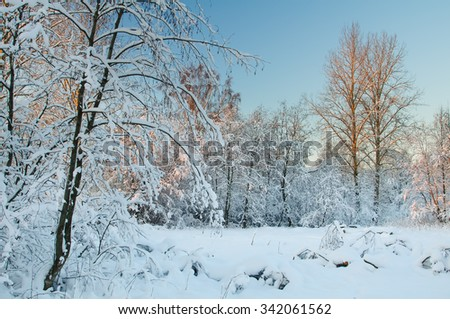 Frost on the trees in the forest. Cold winter day at sunset. Frost and snow on the branches. Winter nature. Panorama of the winter forest. The winter landscape. Snow fairy forest - stock photo