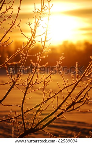 frost on tree at the lake shore at the sunrise - stock photo