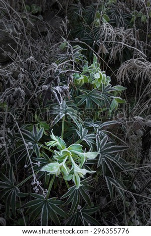 Frost on vegitation and leaves on a cold day. - stock photo