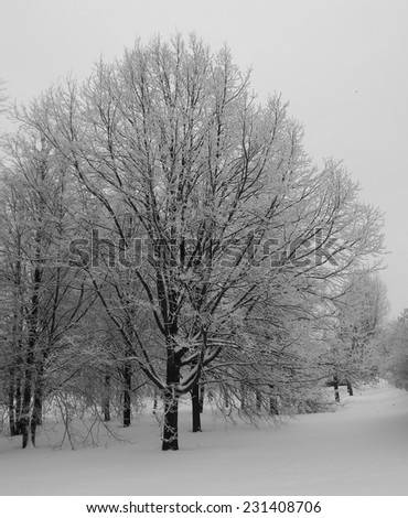 Frost tree, Kolomenskoe, Moscow, Russia. Winter cold day. - stock photo