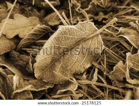 Frosted leaf, winter in Germany