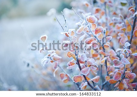 Frosted Plant - stock photo