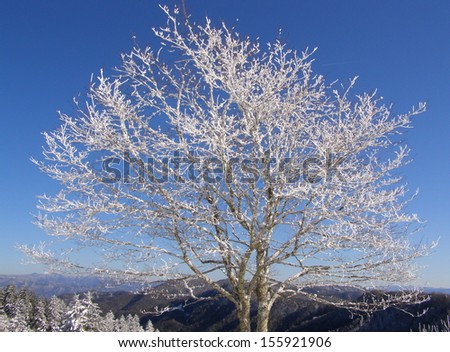 Frosted tree in the Appalachians - stock photo