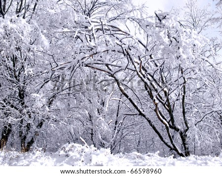 Frosted trees - stock photo