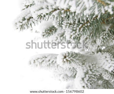 frosty coniferous branches - stock photo