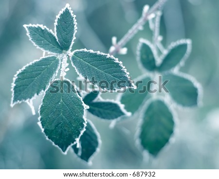 Frosty leaves + blue filter - stock photo
