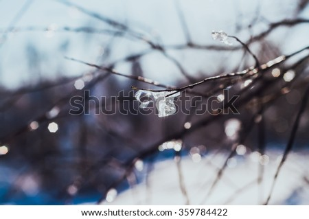 Frosty tree branch in winter - stock photo