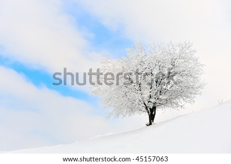frosty tree in winter - stock photo