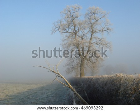 Frosty tree on a misty morning